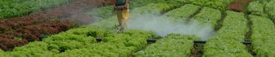 Usos del cloruro de potasio en agricultura
