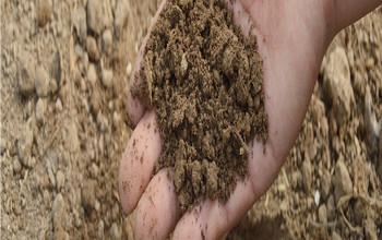 Características del sulfato de amonio como fertilizante