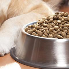 Alimento para animales y mascotas